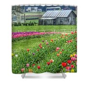 Come See Tulips  Shower Curtain