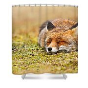 Comfortably Fox Shower Curtain