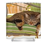 Comfy Kitty Shower Curtain