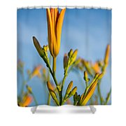 Coming Attractions Shower Curtain