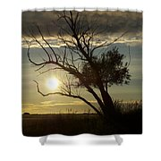 Coming Home B Shower Curtain