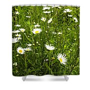 Coming Up Daisy's Shower Curtain