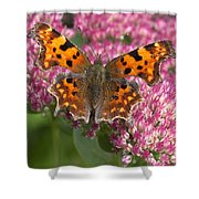 Comma 2 Shower Curtain