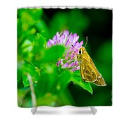 Common Banded Skipper Shower Curtain