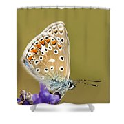 Common Blue Shower Curtain