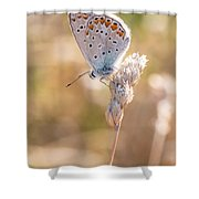 Common Blue Butterfly Shower Curtain