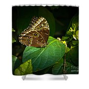 Common Blue Morpho Moth Shower Curtain