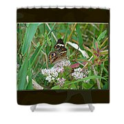 Common Buckeye Butterfly - Junonia Coenia Shower Curtain
