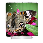 Common Buckeye Junonia Coenia Shower Curtain