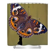 Common Buckeye Precis Coenia Shower Curtain