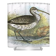 Common Curlew Shower Curtain