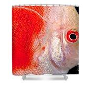Common Discus Shower Curtain