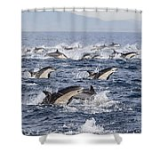 Common Dolphins Surfacing San Diego Shower Curtain by Richard Herrmann
