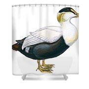 Common Eider Shower Curtain