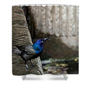 Common Gackle Shower Curtain