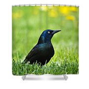 Common Grackle Shower Curtain by Christina Rollo
