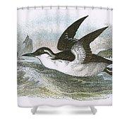 Common Guillemot Shower Curtain