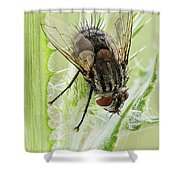 Common House Fly 0.9x Shower Curtain