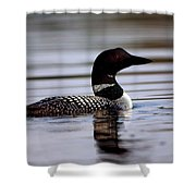 Common Loon 8 Shower Curtain