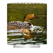 Common Loon Pictures 145 Shower Curtain
