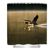 Common Loon Pictures 147 Shower Curtain