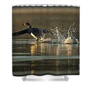 Common Loon Pictures 152 Shower Curtain