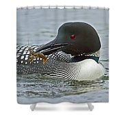 Common Loon With Food Shower Curtain