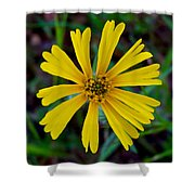 Common Madia In Park Sierra-ca Shower Curtain