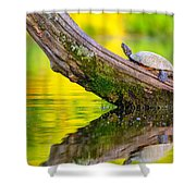 Common Map Turtle Shower Curtain