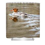 Common Merganser Hen Shower Curtain