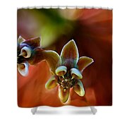 Common Milkweed Shower Curtain