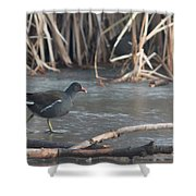 Common Moorhen Iced Lake Shower Curtain