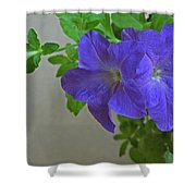 Common Morning Glory   #1313 Shower Curtain