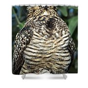 Common Nighthawk Napping Shower Curtain