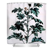 Common Or Garden Feverfew Shower Curtain