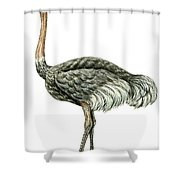 Common Ostrich Shower Curtain