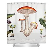 Common Poisonous Plants Shower Curtain by English School