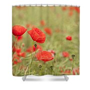 Common Poppies Shower Curtain