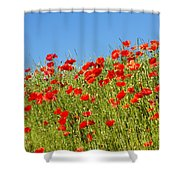 Common Poppy Flowers  Shower Curtain