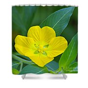 Common Primrose Willow 1 Shower Curtain
