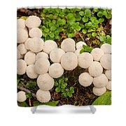 Common Puffball Mushrooms Lycoperdon Perlatum Shower Curtain