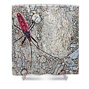 Common Red Bug Along The Seti River Road-nepal  Shower Curtain