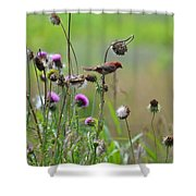 Common Redpoll In A Field Of Thistle Shower Curtain
