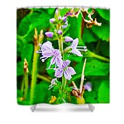 Common Speedwell On Skyline Trail In Cape Breton Highlands National Park-nova Scotia  Shower Curtain