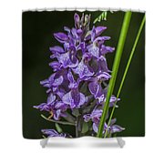 Common Spotted Orchid Shower Curtain
