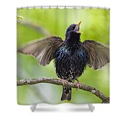 Common Starling Singing Bavaria Shower Curtain