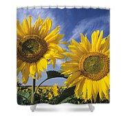 Common Sunflower Field Shower Curtain