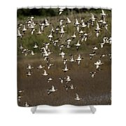 Common Teal Anas Crecca 1 Shower Curtain