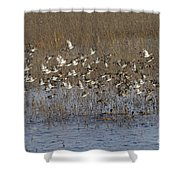 Common Teal Anas Crecca Shower Curtain