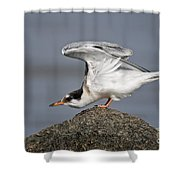 Common Tern Pictures 67 Shower Curtain